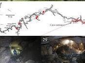 Nuevas especies descubiertas cuevas Japón
