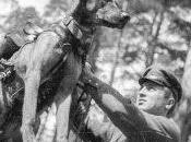 Curiosidades Guerra Mundial