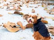 Aristopet claves para mascotas pasen frío