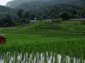 Inthanon, tribus, arrozales cascadas norte Tailandia