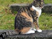 ¿Por todos gatos tricolores hembras?