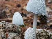 jornadas micológicas Condemios Arriba
