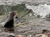 Islas Galápagos. Parte Lobos Marinos. Relax