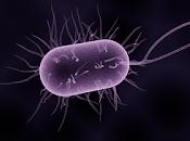 universo bacterias Data [mp3]