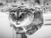 gato Schrödinger sistemas biológicos