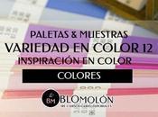 Variedad Color Paletas Muestras