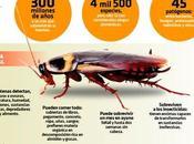 Cucarachas: animales odiados increíbles