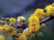 especies características flora Parque Nacional Lihue Calel Pampa): Arboles