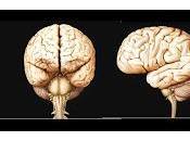 Descubren mecanismos moleculares vinculados Autismo