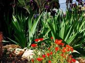 Jardín Rocallas
