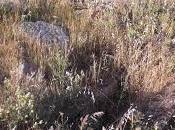Imagen mes: Tumbas visigodas Peñaflor, Berrocalejo