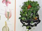 Cómo ayudar plantas llegada primavera. consejos fáciles para tenerlas bonitas