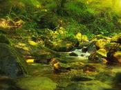 magia bosque