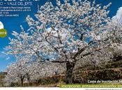 marcha senderista Cerezo Flor 2019 será abril Torno.