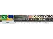 Consejo reunirá para analizar caída precio aceite oliva.