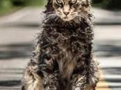 "Series sobrenaturales: nuevo spot ""Cementerio Animales"" inquietante"