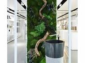 diseños casas jardin interior
