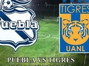 Puebla Tigres vivo liga
