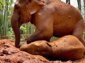 Actividades turismo responsable Tailandia