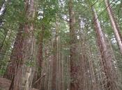 bosque secuoyas Monte Cabezón
