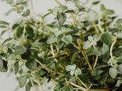 consejos para iniciar huerto plantas aromáticas