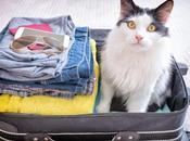 Recomendaciones para tener unas vacaciones inolvidables mascota