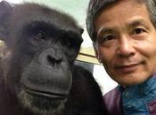 memoria visual chimpancés asombrosa