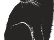 motín Gatos