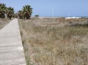 Plantas sal, solución cambio climático