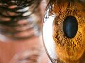 Anatomía: Transparencia protección córnea
