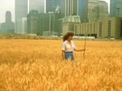 campo trigo Agnes Denes Manhattan