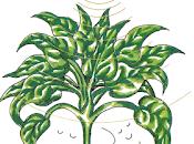 Mort Garson Mother Earth's Plantasia (1976)