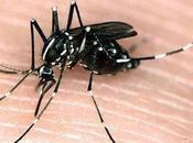 Cómo hacer repelente para mosquitos otros insectos casero natural