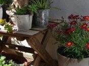 Concurso: Enséñanos terraza, jardín, porche...