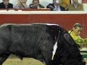 Mari Vega corta oreja Puebla