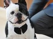 perro boda... también!
