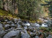 Saltando entre rocas troncos