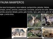 flora fauna Santiago Estero queda representada especies como mistol monte, atamisqui, mirikina, entre otros.