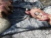 quitan piel cocodrilos Huasteca Potosina forma ilegal