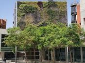 Propuesta diseño criterios selección especies jardín vertical Vicente Raspeig