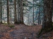 escalera bosque