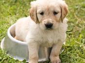 ¿Cómo saber mascota está enferma?