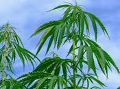 Beneficios para salud aceite cannabis