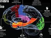 Música Neurociencia III: ¿Qué Hace Nuestro Cerebro?