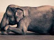 Esta noche seré elefante