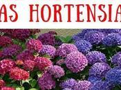 Cómo cambiar color Hortensias