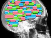 Noticias cerebro