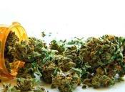 Cannabis medicinal terapéutico industrial planta marihuana