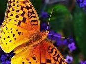 Mariposa amarilla...