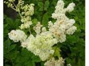 Artricenter: Plantas beneficiosas para tratamiento Artritis. PARTE